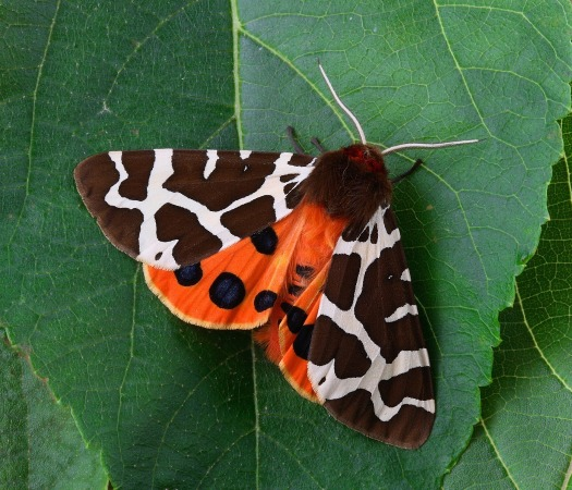 moth-1749439_1920